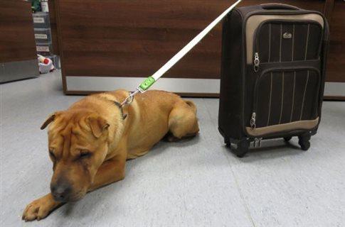 Εγκατέλειψαν σκύλο με τα υπάρχοντά του σε βαλίτσα