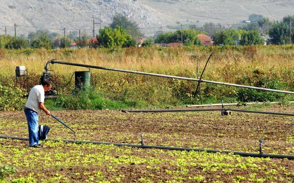 Κατατίθενται αιτήσεις για ζημιές σε φυτικό κεφάλαιο