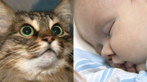 Αδέσποτη γάτα έσωσε βρέφος πεταμένο στα σκουπίδια