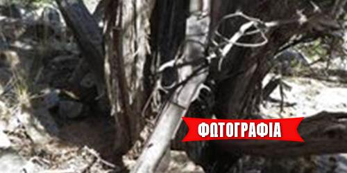 Τουφέκι του 1882 βρέθηκε ακουμπισμένο σε δέντρο