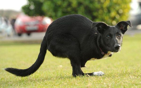 Σκύλος πιστεύει ότι είναι... καγκουρό