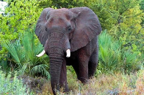 Ινδία: Εξαλλος ελέφαντας καταπάτησε ζευγάρι