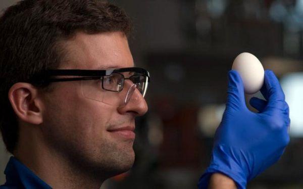 Επιστήμονες κατάφεραν να ξε-βράσουν βραστά αυγά