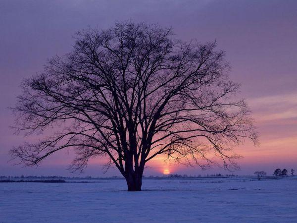 Ο χειμώνας