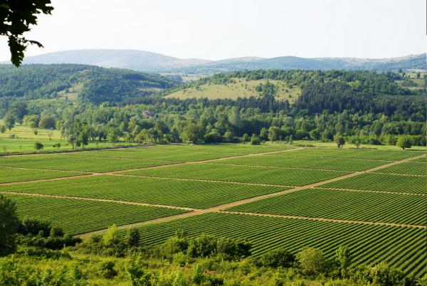 Ψηφιακή χαρτογράφηση αγροτεμαχίων