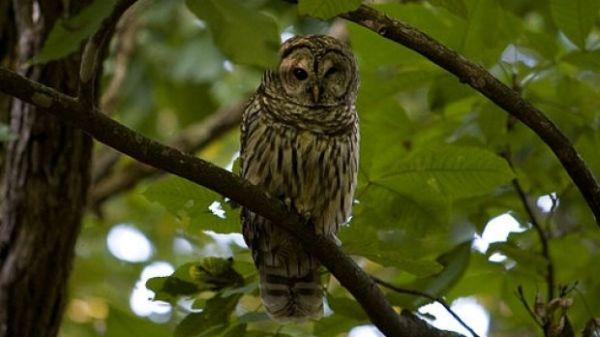 «Προσοχή στην κουκουβάγια» συνιστούν στους επισκέπτες πάρκου