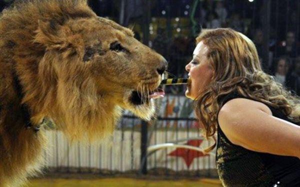 Λιοντάρι επιτέθηκε σε θηριοδαμάστρια