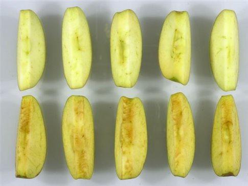 Εγκρίθηκε στις ΗΠΑ το πρώτο «μεταλλαγμένο» μήλο