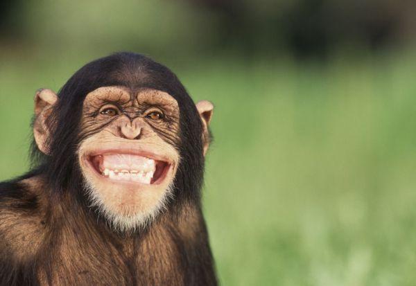 Ατεκνο ζευγάρι πλούσιων όρισε κληρονόμο του έναν... πίθηκο
