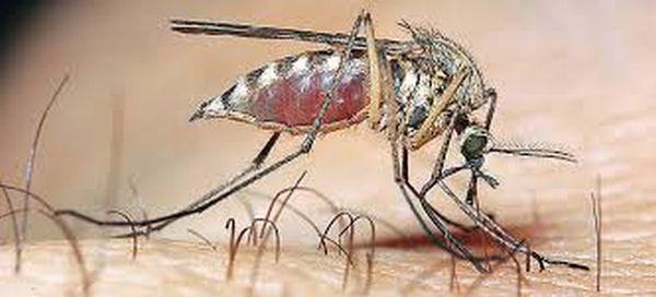 «Τεράστια απειλή για τον πλανήτη» η ανθεκτική ελονοσία