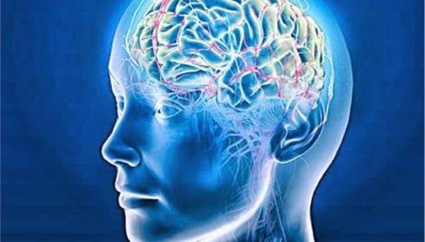 Ενα γονίδιο διακρίνει τον εγκέφαλο του ανθρώπου από των ζώων