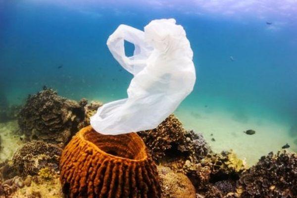 Ο Μεγάλος Κοραλλιογενής Ύφαλος τρώει τη ρύπανση από πλαστικά