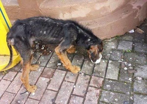 Βρέθηκε σκελετωμένος σκύλος στην Ξάνθη
