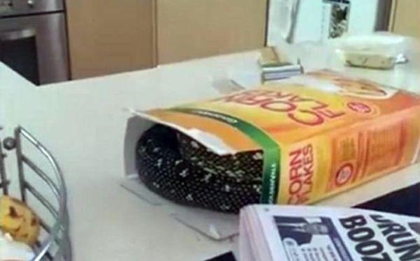 Βρήκε πύθωνα σε... κουτί δημητριακών