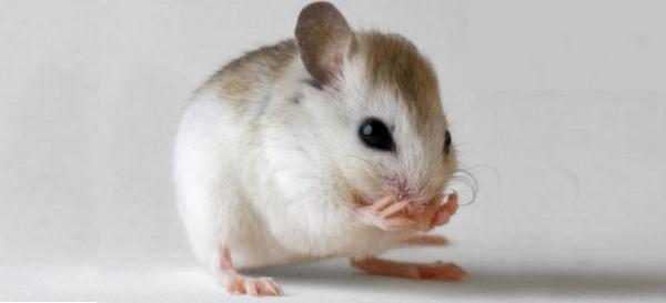 Εμφύτευση... αναμνήσεων σε ποντίκια