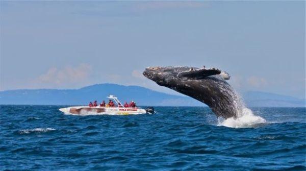 Μεξικό: Φάλαινα έπεσε σε σκάφος και σκότωσε τουρίστρια