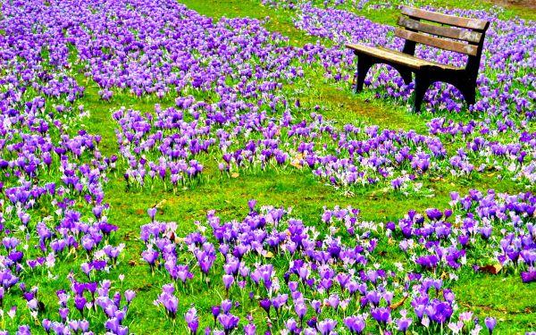 Το πράσινο και τα λουλούδια στη ζωή