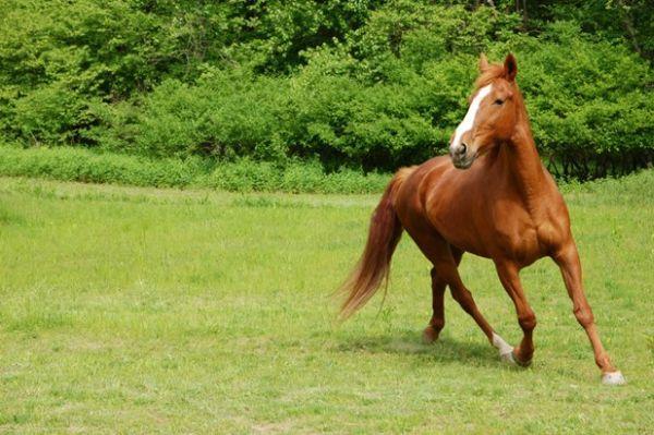 Καταδίκες από το Εφετείο Λάρισας για τις επιδοτήσεις των ανύπαρκτων αλόγων