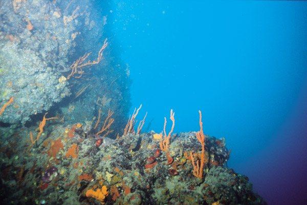 Θαλάσσιος παράδεισος στο βυθό της Γυάρου