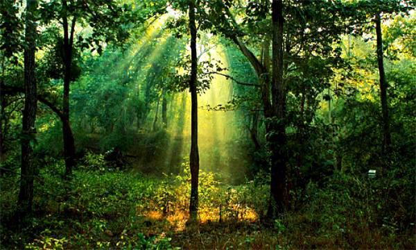 Περίπατος μέσα στο δάσος