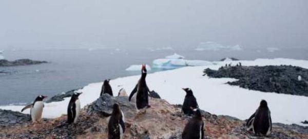 Στο κόκκινο η Ανταρκτική: Σημείωσε την υψηλότερη θερμοκρασία στα χρονικά