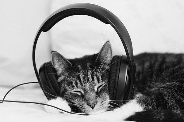 Πώς επηρεάζει η μουσική τις γάτες