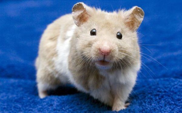 Εγκεφαλικό εμφύτευμα έκανε τυφλά ποντίκια να δουν