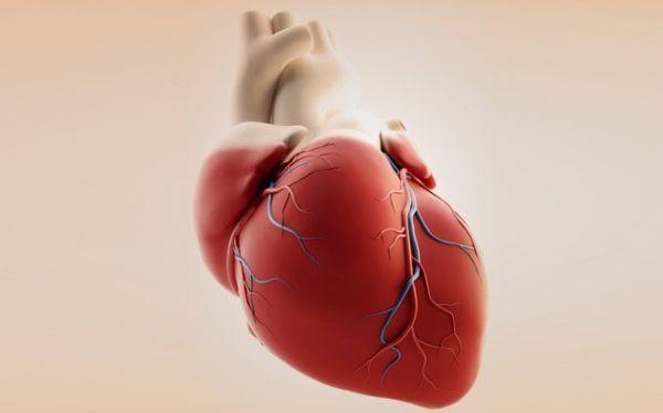 Θεαματική αναγέννηση κυττάρων καρδιάς