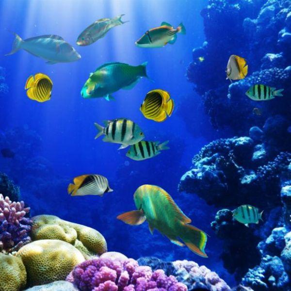 WWF: Στα 24 τρισ. δολάρια ο πλούτος των θαλασσών