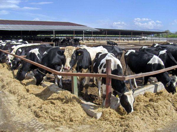 «Χαράτσι» για τις δηλώσεις ΟΣΔΕ καλούνται να καταβάλλουν οι κτηνοτρόφοι