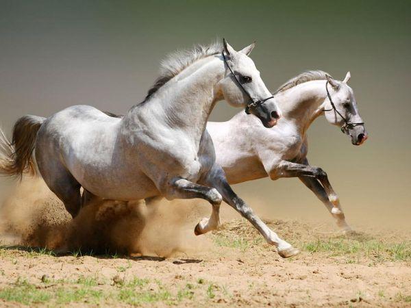 Ιππικοί αγώνες στη Σκιάθο