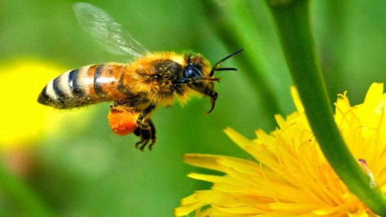 Μελβούρνη: Ομογενής κατασκευάζει κοσμήματα από μέλισσες!