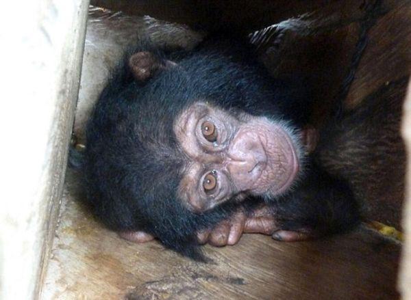Αυτό είναι το πρόσωπο του λαθρεμπορίου ζώων...