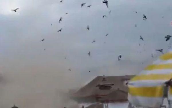 Η αντίδραση των πουλιών την ώρα του φονικού σεισμού