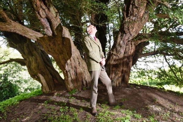 Το αρχαιότερο δέντρο της Βρετανίας πεθαίνει μετά από 4.000 χρόνια