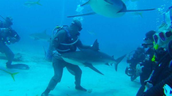 Πώς να υπνωτίσετε έναν επικίνδυνο καρχαρία