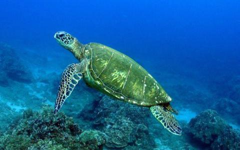 Βρέθηκαν νεκρές δύο θαλάσσιες χελώνες