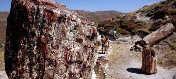 Νέο απολιθωμένο δάσος ανακαλύφθηκε στη Λέσβο