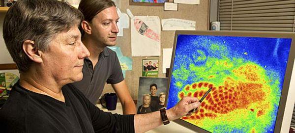 Ο άνθρωπος που χρωμάτισε τον εγκέφαλο και αποκάλυψε συνδέσεις και λειτουργίες του