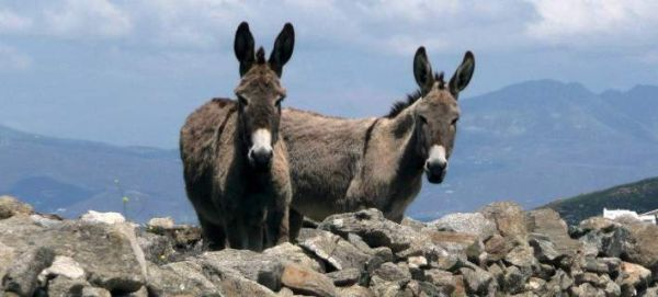 Αριθμός κυκλοφορίας για άλογα, γαϊδούρια και μουλάρια στη Λέρο