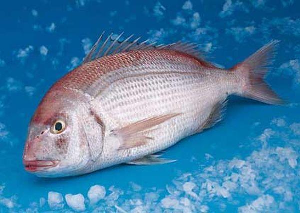 Κατάσχεση αλιευμάτων