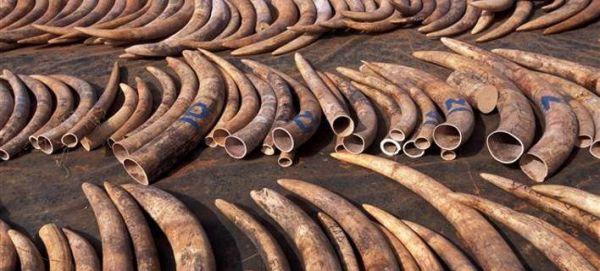 Χιλιάδες ζώα κατασχέθηκαν σε επιχείρηση κατά του λαθρεμπορίου (εικόνες)