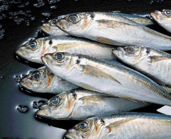 Συνελήφθη με ψαριά 83 κιλών στο Θαλάσσιο Πάρκο Αλοννήσου