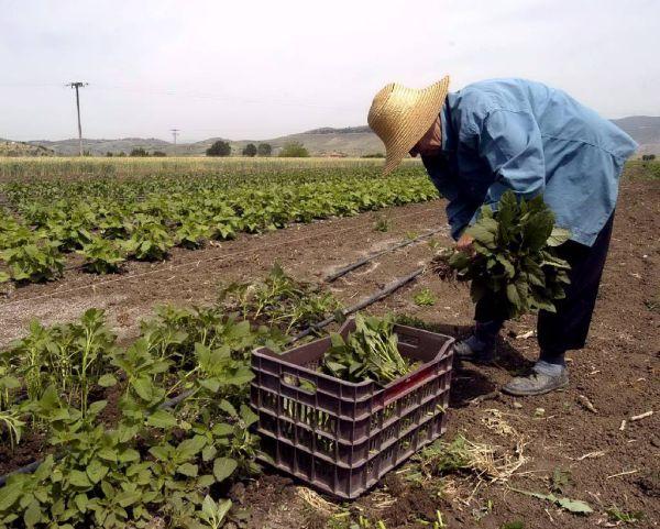 Αύριο ο έλεγχος των ζημιών στις καλλιέργειες του Αλμυρού