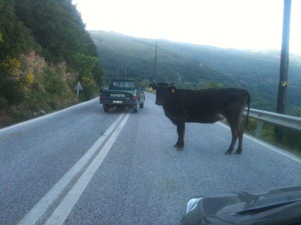 Καμία σήμανση για διέλευση ζώων στην επαρχιακή οδό Βόλου - Ζαγοράς