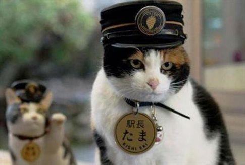 Τάμα: Η γάτα-σταθμάρχης για την οποία θρηνεί η Ιαπωνία
