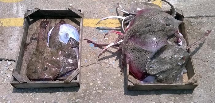 Νέα σύλληψη για παράνομη αλιεία στο Θαλάσσιο Πάρκο Αλοννήσου