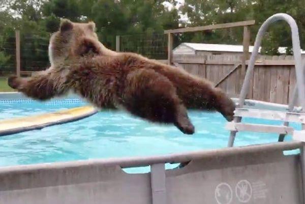 """Μια αρκούδα """"Λουγκάνις"""" απολαμβάνει τις βουτιές στην πισίνα (βίντεο)"""