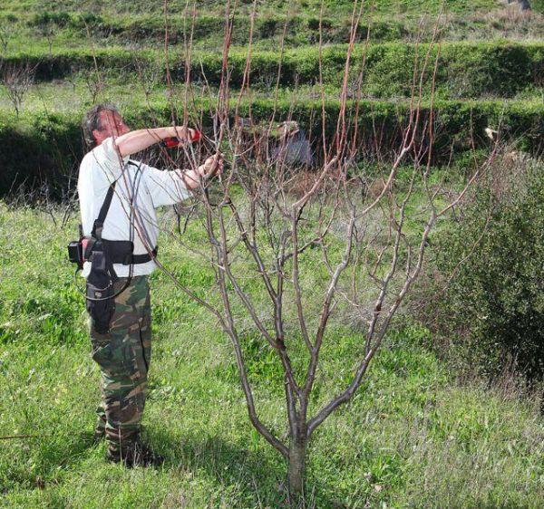 Παραγωγός δαμάσκηνου προωθεί τον αγροτουρισμό στη Σκόπελο