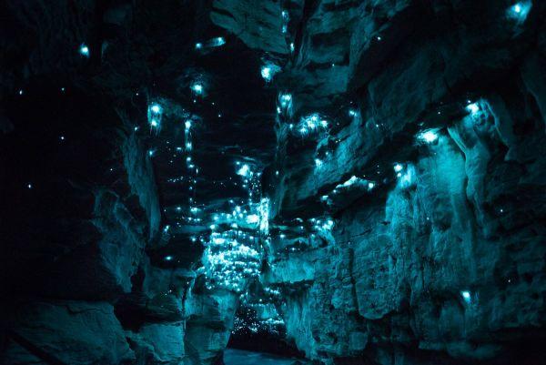 Εντομα δημιουργούν ένα μαγευτικό τοπίο στις σπηλιές της Νέας Ζηλανδίας (εικόνες)